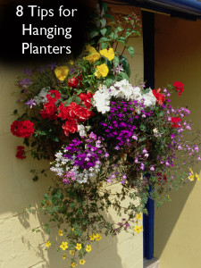 8 Tips for Hanging Planters