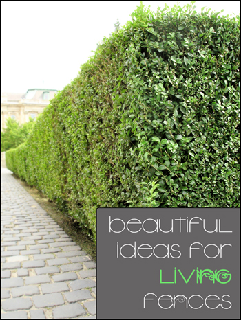 Beautiful Ideas for Living Fences