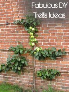 Fabulous DIY Trellis Ideas (1)