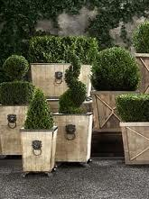 planter boxes topiaries