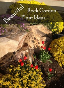 Beautiful Rock Garden Plant Ideas