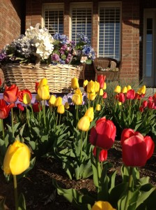 Tulips and front porch