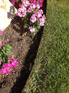 Garden Curbing vs Trench Edging