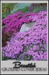 Beautiful Ground Cover Ideas