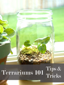 Terrariums 101 ~Tips and Tricks~