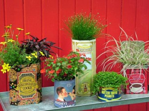 11 container gardening Ideas