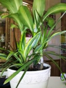 5 Great Low-Maintenance Houseplants