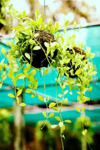 5 Great Low-Maintenance Houseplants