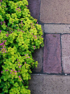3 of the BEST Springtime Perennials