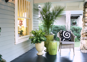 patio and tropical plants